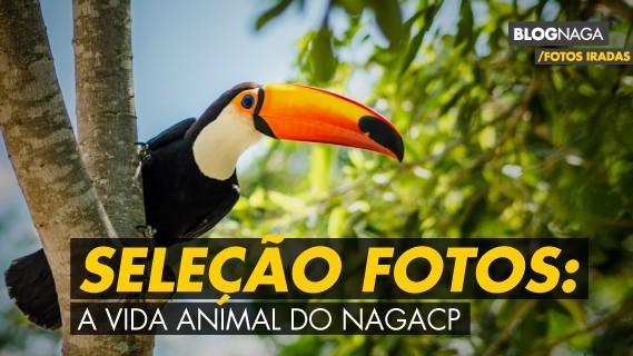 Seleção de fotos: mundo animal